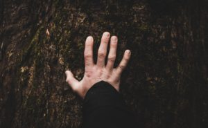 A bare hand presses against the rough bark of a tree
