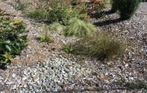 rain garden filled in with plant growth