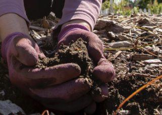 Handfuls of yummy rain garden soil